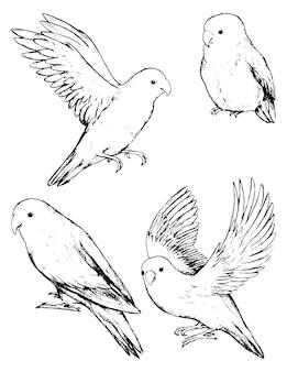 흰색 절연 앵무새 모란의 컬렉션입니다. 열대 조류의 검정 잉크 스케치입니다. 손으로 그린 벡터 일러스트 레이 션의 집합입니다. 디자인을 위한 빈티지 그래픽 요소입니다.