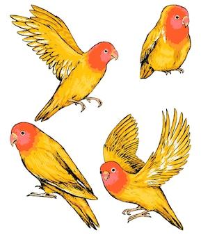 흰색 절연 앵무새 모란의 컬렉션입니다. 열대 조류의 컬러 스케치입니다. 손으로 그린 벡터 일러스트 레이 션의 집합입니다. 디자인을 위한 빈티지 그래픽 요소입니다.