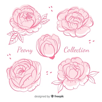 Collection of peony flowers in hand drawn style