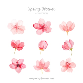 Collection of pink spring flowers