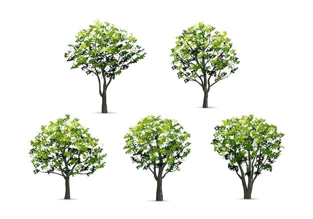 白い背景で隔離のリアルな木のコレクション。ランドスケープデザイン、公園、屋外のグラフィックのための自然なオブジェクト。ベクトルイラスト。
