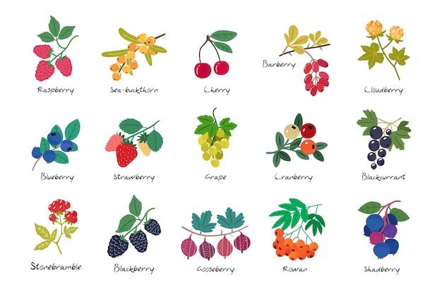 分離された熟した果実のコレクション