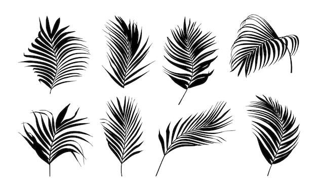 Коллекция силуэт пальмовых листьев
