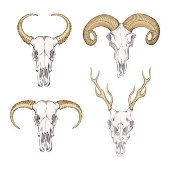 西部の神秘的な野生動物の頭蓋骨のコレクション。ボヘミアンヘッド、西洋のヴィンテージ動物。