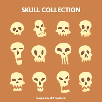 식 두개골의 컬렉션