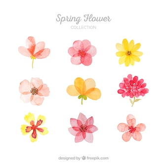 Flower vectors photos and psd files free download collection of spring flowers mightylinksfo Images