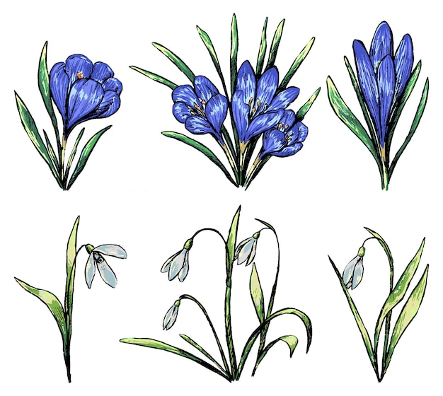 春の植物のコレクション。クロッカス、スノードロップのセット。白で隔離のヴィンテージ植物スケッチ。手描きのベクトル図です。デザインのための色付きの要素。