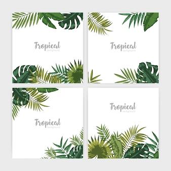 緑の熱帯の葉の正方形の背景のコレクション。