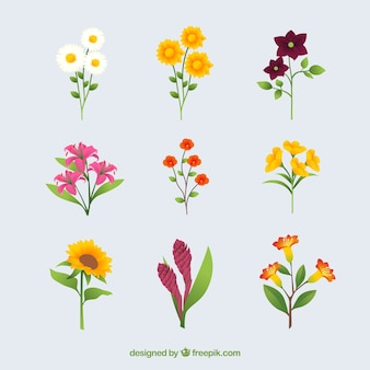 Collection of summer flowers in flat design
