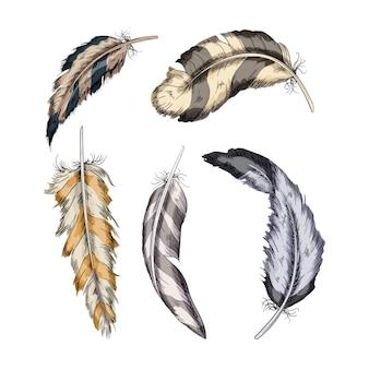 Коллекция иллюстрации перьев