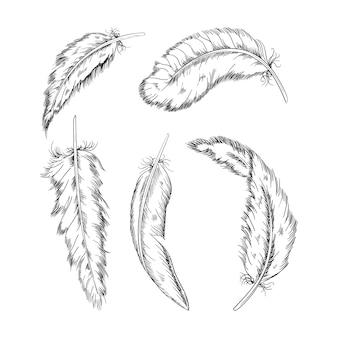 Коллекция монохромных перьев, иллюстрация