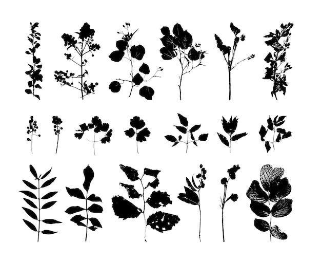 Коллекция прорисованных веток деревьев и кустов Premium векторы