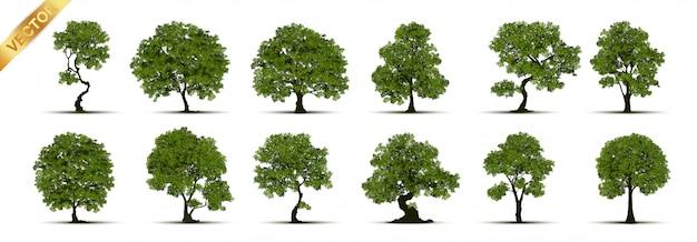 Коллекция дерева