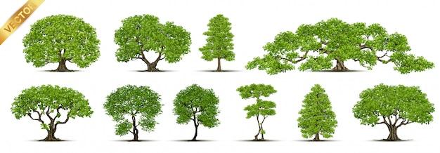 나무의 컬렉션입니다.