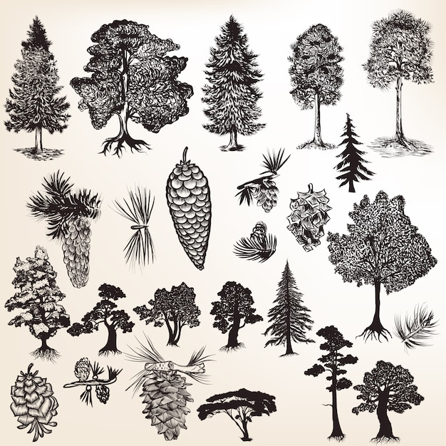 pine vectors photos and psd files free download rh freepik com free vector art pine trees vector images of pine trees