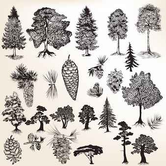 Collection of trees with pinecones