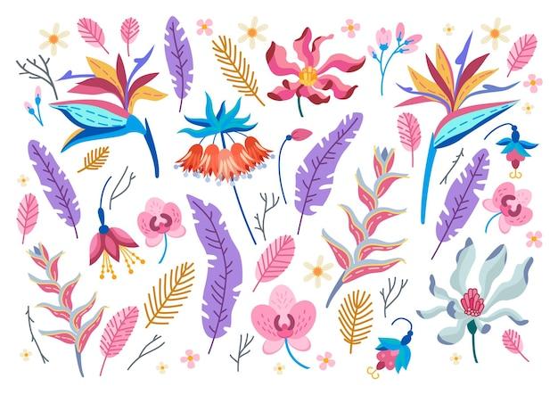 Коллекция тропических цветов. мультфильм тропических лесов цветочные элементы изолированы