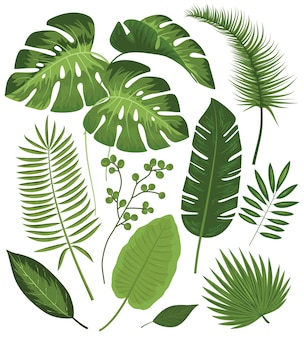 Collection of tropical leaves