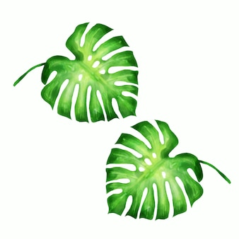 열 대 잎의 컬렉션