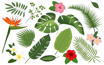 Collection of tropical plants and exotic flowers