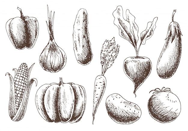 野菜のコレクション。手描きの有機食品。ビンテージスタイルの健康食品の線形グラフィック。ベジタリアンセット。スケッチのベクトル図