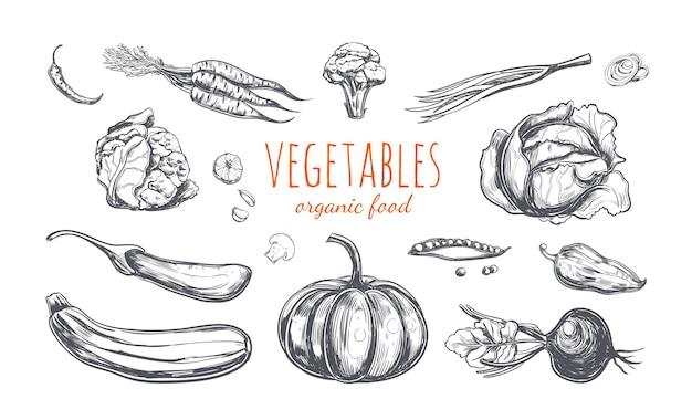 白で隔離の野菜のコレクション