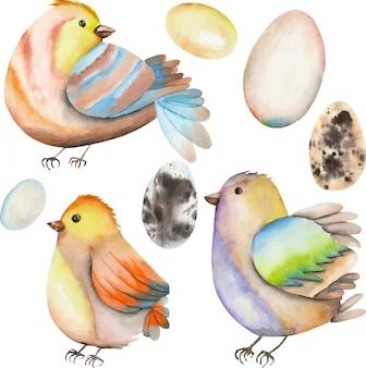 수채화 조류와 계란의 컬렉션