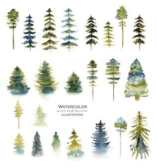 수채화 침엽수 소나무와 전나무의 컬렉션은 흰색에 고립 된 그림을 그려
