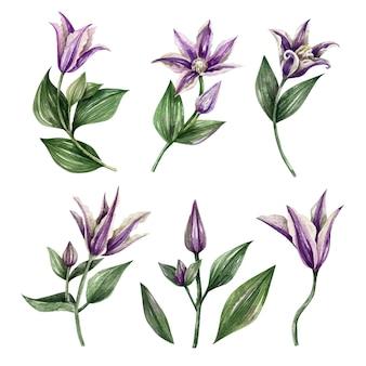 水彩要素の花ハーブの葉のコレクション