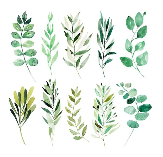 分離された水彩画の緑の枝の植物要素のコレクション