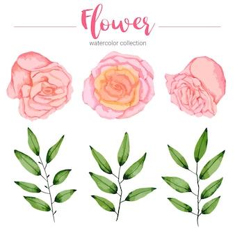 水彩イラスト美しい花のコレクション