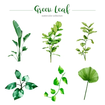 Коллекция акварельных иллюстраций зеленого листа