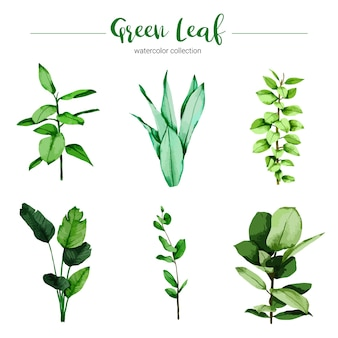 수채화 그림 녹색 잎의 컬렉션