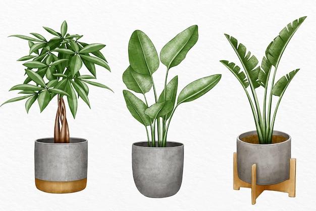 냄비에 수채화 식물의 수집