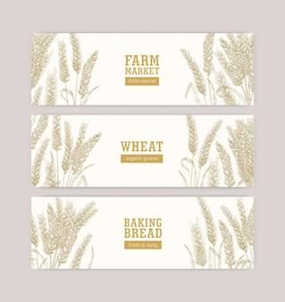 白い背景の上の小麦の耳または小穂を持つwebバナーテンプレートのコレクション。栽培植物、穀物または食用作物。天然物のプロモーションのためのモノクロのリアルなベクトルイラスト。
