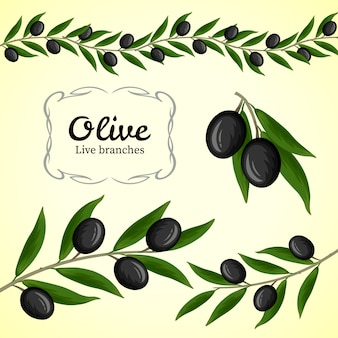 Collection of olive branch, black olives logo