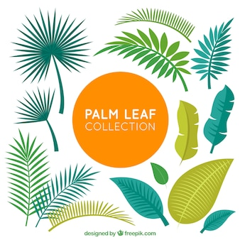 Collection of palm leaves