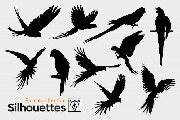 Collection of parrot silhouettes. exotic birds.