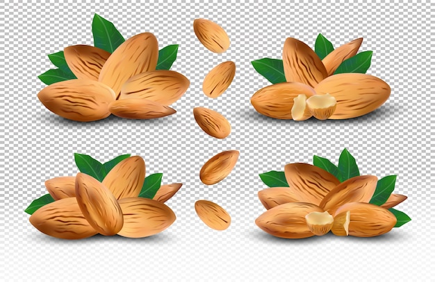 Сбор очищенного миндаля. 3d реалистичный миндаль под разными углами. свежие орехи, изолированные на прозрачном фоне. набор иконок. иллюстрация