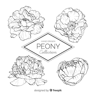 Peony Vectors Photos And Psd Files Free Download