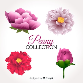 Collection of peony flowers