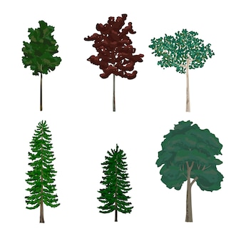 Collection of pine and leaf tree illustrations