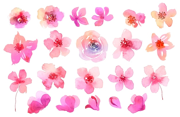 Collection of pink flowers in watercolor