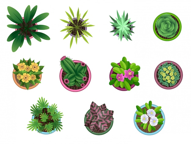 Collection of plant top view in pots. home plant set. cactus, green leaves concept. interior house gardening design. set of different house plants with flowers.