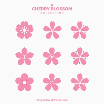 Collection of pretty cherry blossoms