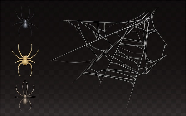Collection of realistic cobweb and spider. web with insect isolated on dark background.
