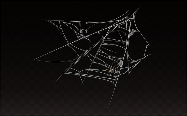 Collection of realistic cobweb with spider on it.