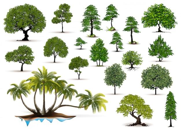 白い背景で隔離のコレクション現実的な木
