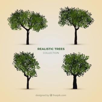 Raccolta di alberi realistici
