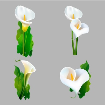 Collection of realistic white flowers